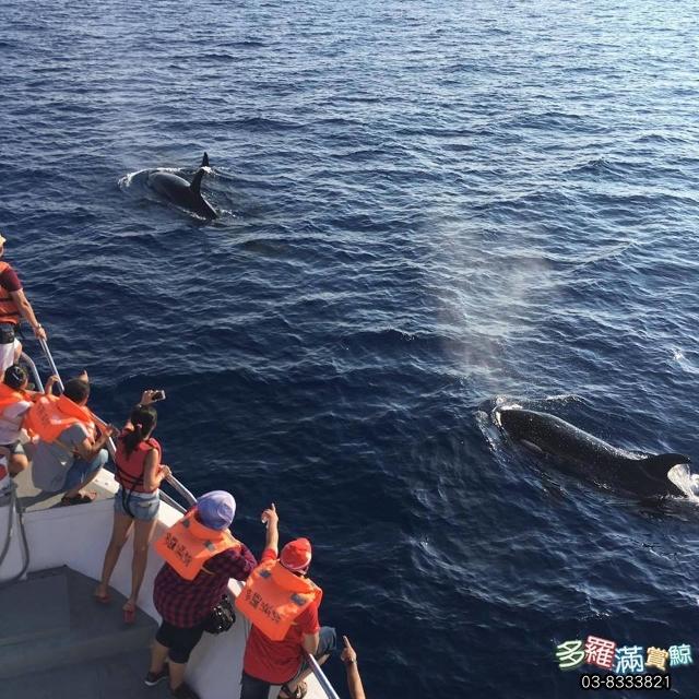 多羅滿賞鯨