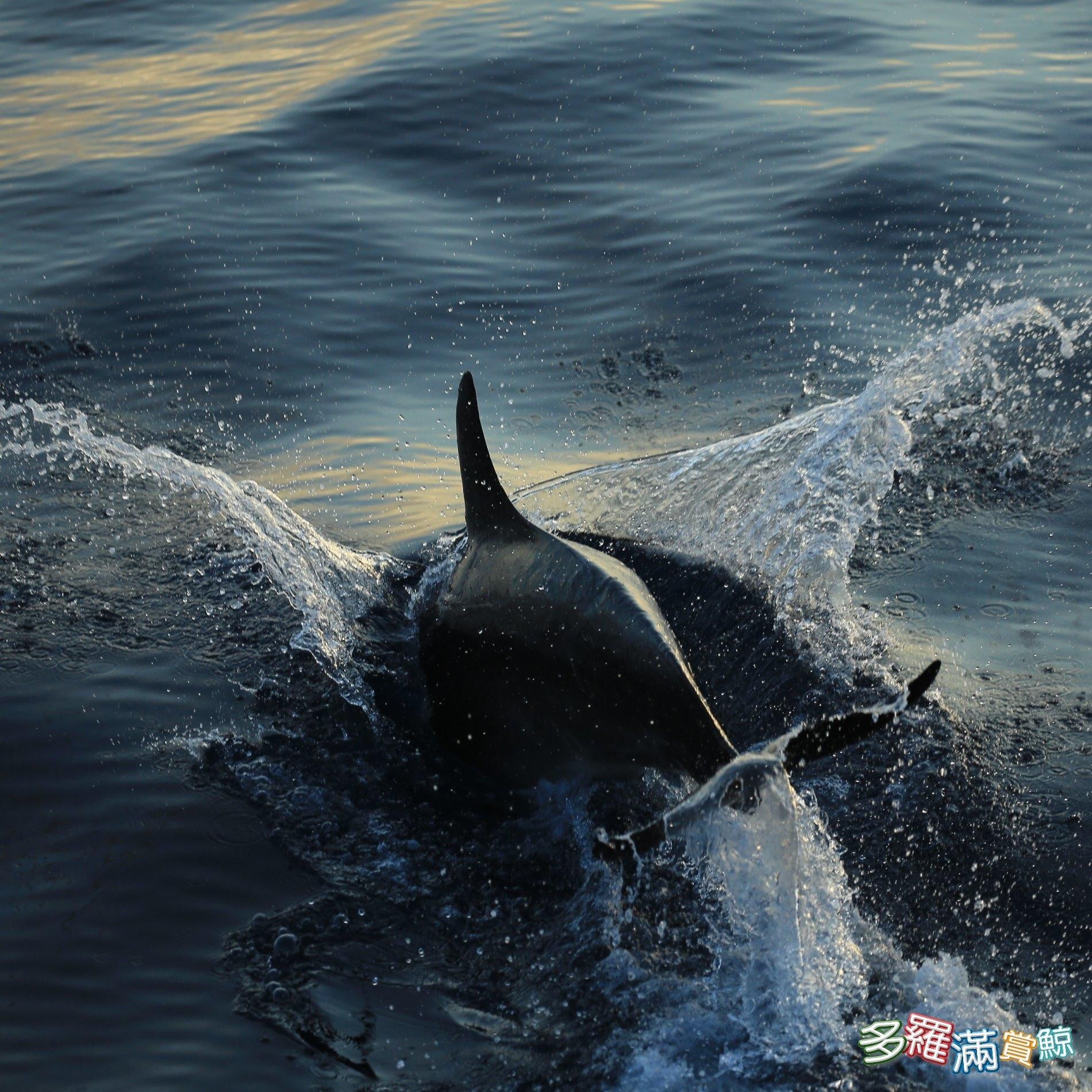 花蓮賞鯨<多羅滿賞鯨*黑潮海洋文教基金會>